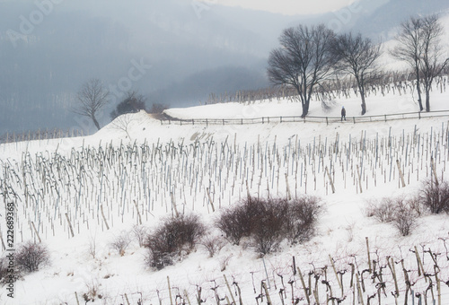 Sapzing w zimie przez pokryte śniegiem winnice