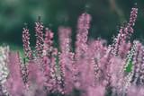 Colores primaverales - 222716992