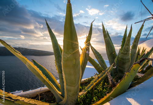 Poster aloe cactus and sea in sunset