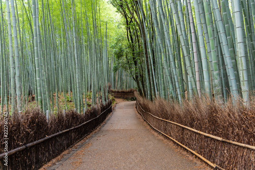 Bamboo forest in Arashiyama, Japan © det-anan sunonethong