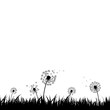 Dandelion Silhouette With White Background