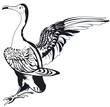 cormorant en noir et blanc - 222778584
