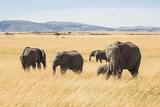 Elephant on Kenyan savannah - 222796346