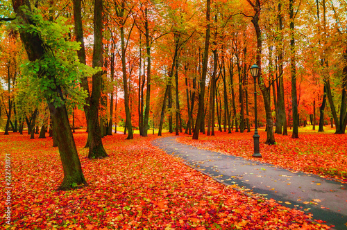 Fall landscape with colorful fall trees and orange fallen leaves. Fall deserted alley - 222798171
