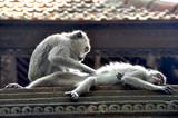 Monkey's love on Bali - 222804181