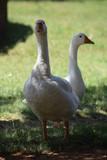 Water Birds - 222811767