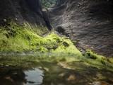 Algas en charcos de marea