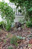 chat en position couché sur une pierre - 222835783