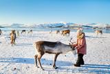 Little girl feeding reindeer - 222852558