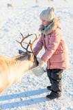 Little girl feeding reindeer - 222852559
