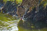 leopard in a tree - 222856136