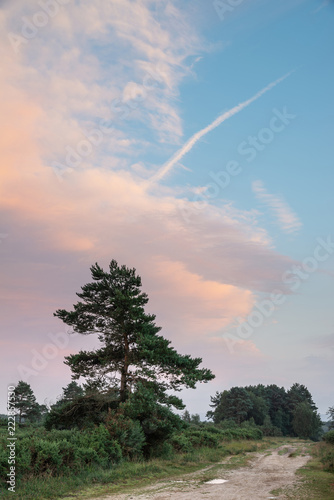 Beautiful Summer sunset landscape image of Ashdown Forest in English countryside with vivd colors - 222857530
