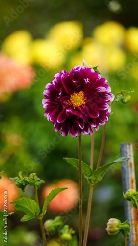 Sticker Flores