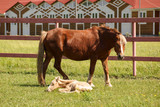 A foal and his mother - 222858919