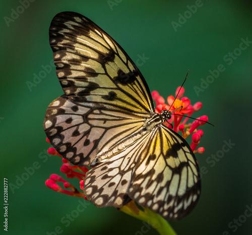 butterfly on flower - 222882777