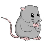 Funny rat illustration