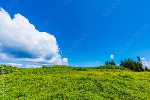 緑と青空 Green and blue sky in Okinawa, Japan