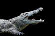 Leinwanddruck Bild - Crocodile on black background