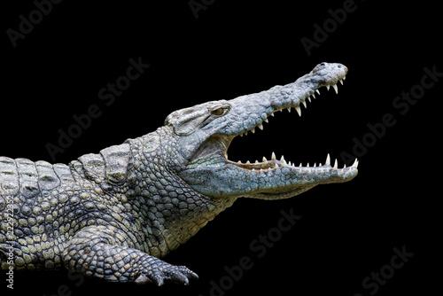 Leinwanddruck Bild Crocodile on black background