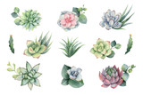 Watercolor vector set with eucalyptus leaves and succulents. - 222922752
