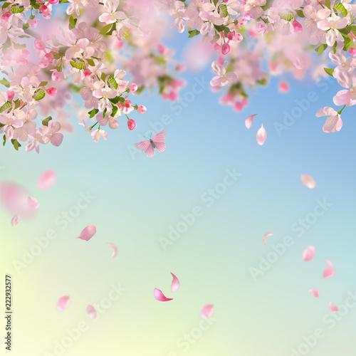 Spring Cherry Blossom Background - 222932577