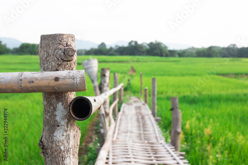 Bamboo bridge In the green rice field