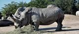 rhinocéros - 222947552
