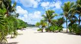 Palm trees on a white sand tropical beach. - 222950956