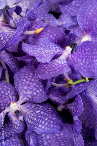 Fine art still life color floral macro image of a bouquet of a violet orchid blossoms