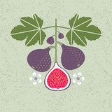 Ripe red figs illustration. Red figs with leaves and flowers on shabby background. Flat design. Original simple flat illustration. - 222961523