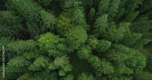 4k aerial photo of spruce tree forest in late summer