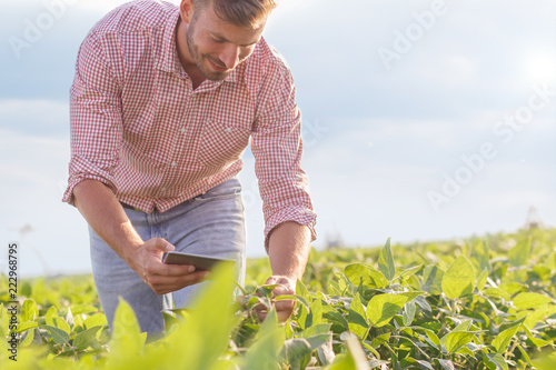 Foto Murales Young farmer in filed holding tablet in his hands and examining soybean corp.