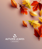 Vector Background With Autumn Leaves - 222975996