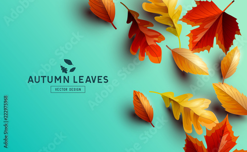 Vector Background With Autumn Golden Leaves - 222975968