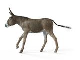 3d rendered illustration of a donkey - 222976321
