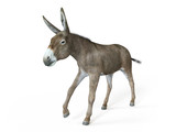 3d rendered illustration of a donkey - 222976339