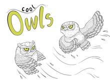 Cute Owls Character Sticker