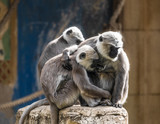 Tiere im Zoo - 222983978