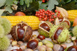 Leinwanddruck Bild - autumn fruits from chestnuts, acorns, maize and rowanberry