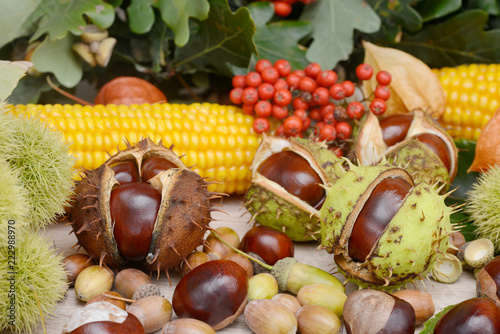 Leinwanddruck Bild autumn fruits from chestnuts, acorns, maize and rowanberry