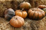 Fair of a pumpkins in California - 222990118