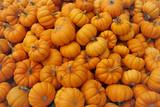Fair of a pumpkins in California - 222990177