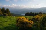 forêt de sapin résineux en montagne avec ciel bleu