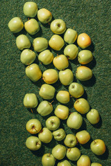 Top view of green apples on grass background