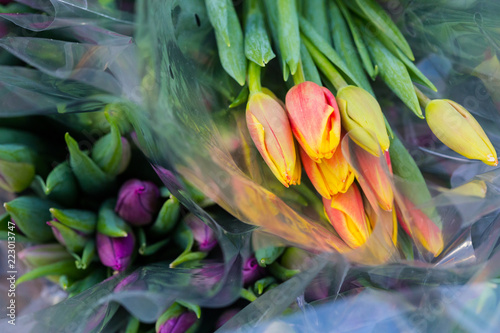 Fototapeta Tulip. Beautiful bouquet of tulips. Colorful tulips. Flower plants cultivation in greenhouse