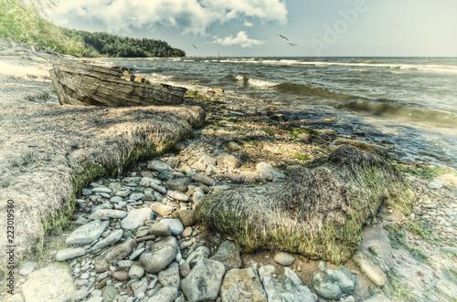 Foto Murales Coastal life