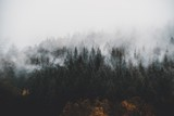 fog in the forest - 223048791