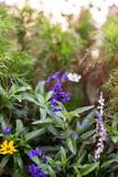 Bunte Blumenwiese mit Lavendel  - 223058767