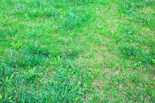 fresh spring lawn of green grass - 223075733