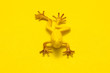 Plastic toy frog on yellow background. Toy yellow frog on yellow background